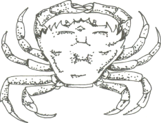 crab drawing 5 teeth 1111.png